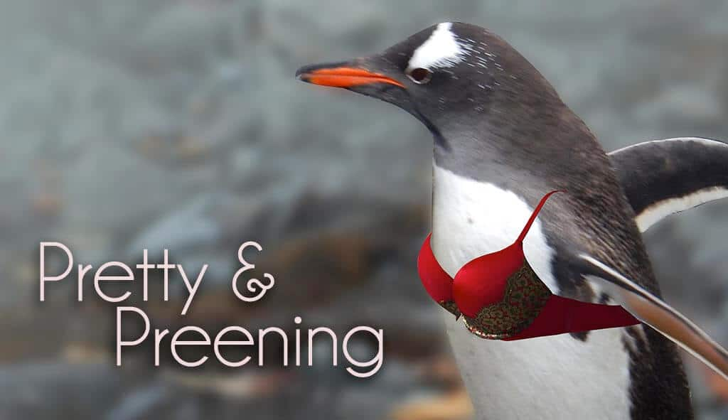 Penguin wearing a red bra with the text pretty and preening